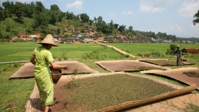p_50 Woman_Tea_drying_landscape_Steve_IMG_3086_76.jpg